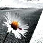Resilienza: ciò che non uccide, fortifica!